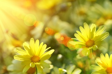 sunshine_tribe_2