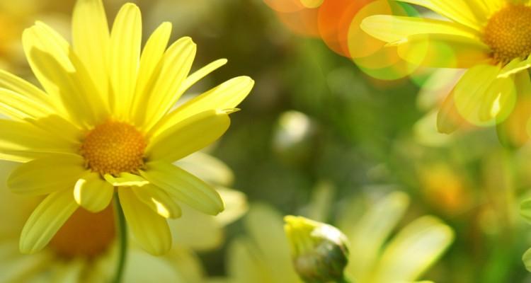 sunshine_tribe_2(crop2)