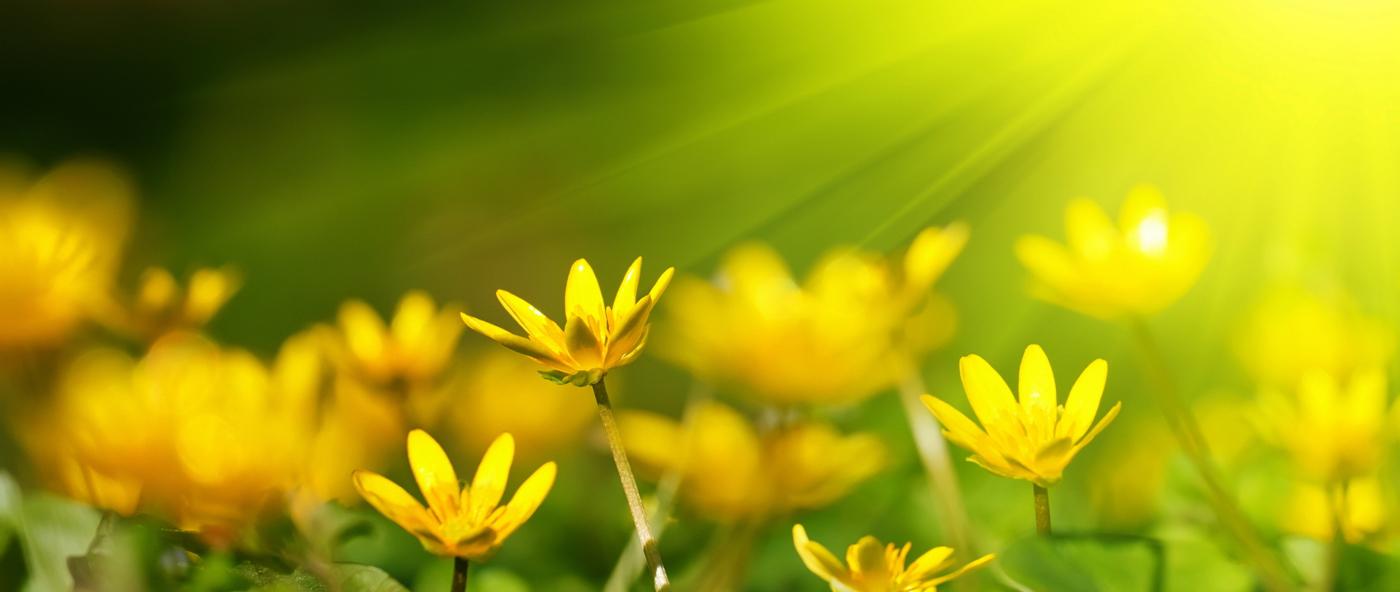 sunshine_tribe(crop)